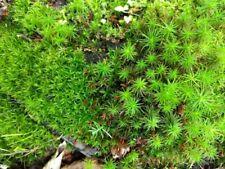 """Huge Live Moss Assortment 9""""x12"""" Bag Stuffed With Fresh Moss Terrarium Vivarium"""