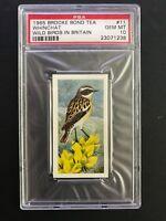 1965 Brooke Bond Tea Wild Birds In Britain PSA 10 Whinchat