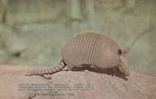 """*New York Postcard-""""Nine-Banded Armadillo"""" (Toothless Mammal) /Zoological Park/"""