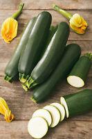 15 Seeds Courgette Zucchini Black Beauty Seed Vegetable Crop Abundant Fruits Veg