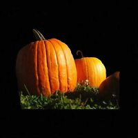 PUMPKIN BIG MAX 10 SEEDS PRIZE WINNING GIANT HEIRLOOM NON-GMO LARGE SQUASH USA