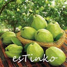 80pcs Guava Seeds Psidium Guajava Tropical Fruits Plant Fruit Tree Seeds Bonsai