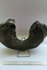 More details for whale atlas bone fossil with stand *genuine and rare*