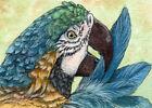 ACEO ORIGINAL Ara Ararauna 630 Mixed Media Painting bird parrot s-lana