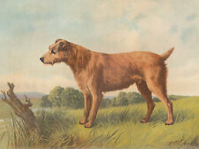 EARLY IRISH TERRIER DOG TERRIERS ANTIQUE DOG LITHOGRAPH ART PRINT 1881