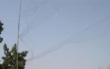 6,0Mx2,4Mx15MM  Japannetz   Stieglitz Vögel Dompfaff Finken Vogelfalle Mono