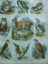 ANTIQUE PRINT C1870'S ANIMALS OWL HAWK BAT HARE GOAT BROWN'S HOLY BIBLE RELIGION