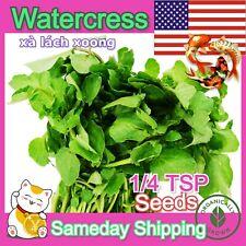 4500 Watercress Seeds Veggie Salad Herb 西洋菜 オランダガラシ 물냉이 xīyáng cài xà lách xoong