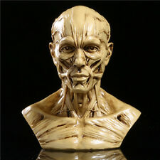 "New 4"" Human Anatomy Skull Head Muscle Bone Medical Arts Teaching Model Sand"