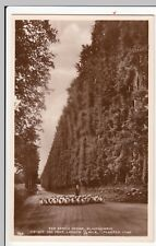Perthshire; The Beech Hedge, Blairgowrie RP PPC, Unposted, With Shepherd & Flock