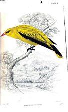 BIRDS identification ORNITHOLOGY 125 old books color antique plates HUMMINGBIRDS