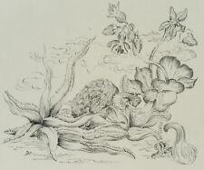 M. B., Botanische Studie mit Aloe Vera, Pflanzendarstellung, 1934, Tusche