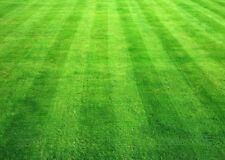 LAWN GRASS SEEDS,-1500 Seeds  (Dust free), Dark Green Soft Turf Grass