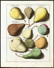Antique Print-PEARS-Tab.IV-Pomologia-Knoop-1758