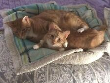 SPONSOR HUGGING FERAL CAT RESCUE Rec PHOTO HELP FEED PAY VETERINARY NON-PROFIT