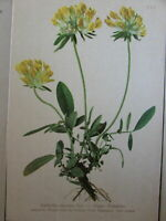 Botanical prints plants of Alps Europe c.1880-1900 collection x 10 old prints