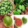 10pc Cucamelon Mini Watermelon Red Miniature Seeds Fruit Plant Home Garden Decor