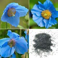 50 BLUE HIMALAYAN POPPY Tibetan Meconopsis Betonicifolia Seeds Flower G0Y3