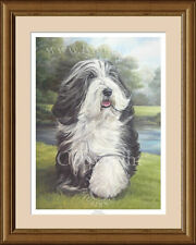 BEARDED COLLIE Beardie fine art print 'Carefree' by Lynn Paterson