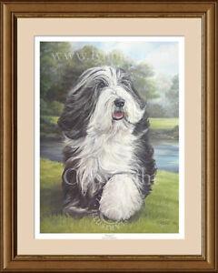 BEARDED COLLIE Beardie fine art print 'Carefree' by Lynn Paterson