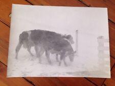 Vintage 1960s Everett Johnson Virginia Rural Snow Cows Farm B&W Original Photo
