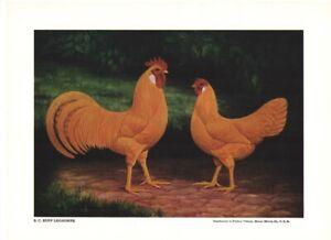Single Comb Buff Leghorns L A Stahmer 1926 Poultry Tribune Reprint