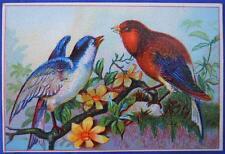 The Centennial America Tea Company Boston Birds Victorian Trade Card Business