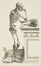 Framed Vintage Medical Print – Standing Skeleton (Picture Poster Human Anatomy)