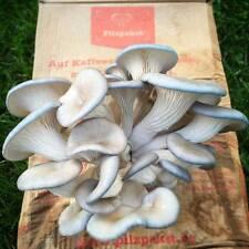 Pacchetto fungo piccioni ostriche BLU Fungo pilzzuchtset fungo BRUT acquistare funghi allevamento