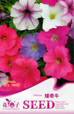 100 Original Package Seeds Colorful Petunia Seeds Petunia Hybrida Flower A062