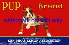 1940 Art~American Staffordshire Pit Bull Terrier Dog~Pup Brand~New Lg Note Cards