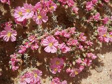 Bristly Sea-Heath (Frankenia serpyllifolia) X 50 Seeds