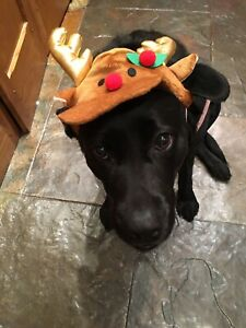 🎄PET LARGE DOG  CHRISTMAS COSTUME REINDEER HAT ( ALL SIZES IN STOCK ) 🎄