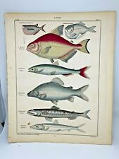 Antique large hand-colored print 1843.Oken's Naturgeschichte Plate 54 Fish