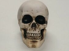 Resin hand painted decorative skull realistic old look medium size moving jaw