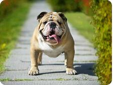 Mauspad Edition Colibri: Kraftpaket - Englische Bulldogge - powerfull dog