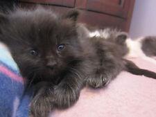 Spay/Neuter a SCOOP Kitten--Receive Picture, Cat Rescue