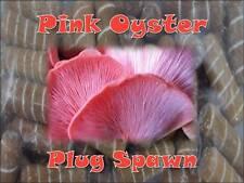 Pink Oyster Mushroom Plug Spawn 50 Count Log Cultivation