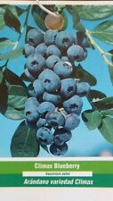 Climax Blueberry Plant Fruit Bearing 4'-5' Blueberries Healthy Roots Nice Plants