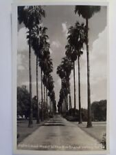 RPPC TX PALM LINED ROAD IN THE RIO VALLEY TEXAS UNUSED REAL KODAK PHOTO POSTCARD