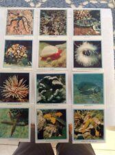 Viscount Cigarette Carton Sixteen Australian Scenes - Gt Barrier Reef