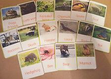 Gli animali che ibernazione - 16 Flash cards-ideale per un progetto invernale in classe