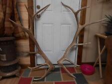 Beautiful 6x6 Colorado Elk Antlers Sheds whitetail rack mule deer mount moose
