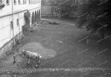 Negativ-Marksuhl-Thüringen-Wartburgkreis-Gebäude-Pferd-1930er-Jahre-83