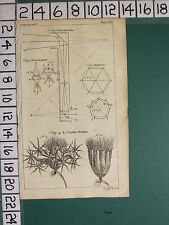 1754 antico stampa ~ polemoscope diagrammi poligono polyhedron ~ cluster-polype