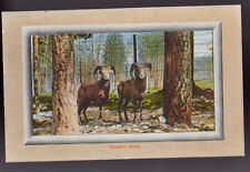 Animal Mountain Sheep Old Vintage Postcard
