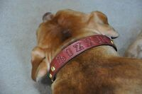 """Leather Dog Custom Collar Personalized FREE  1"""" Wide"""