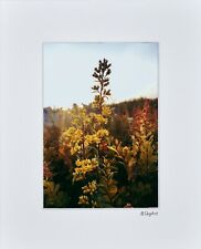 Flower Yellow  Photo Art House Home Bathroom Wall Decor Matted Print Picture