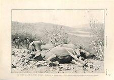 Chasse à l'Eléphant en Afrique Chasseur Fusils Casque Colonial  GRAVURE 1902