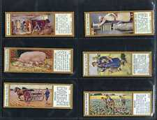 More details for typhoo - work on the farm - full set of 25 cards
